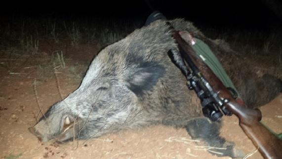 caza de jabalí