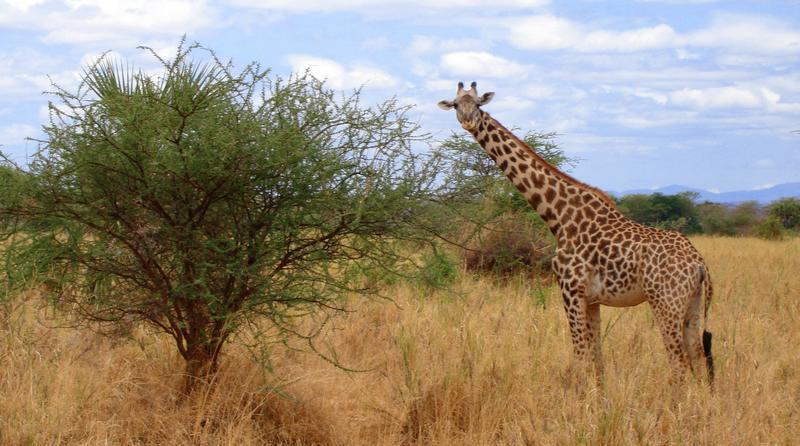 safaris baratos